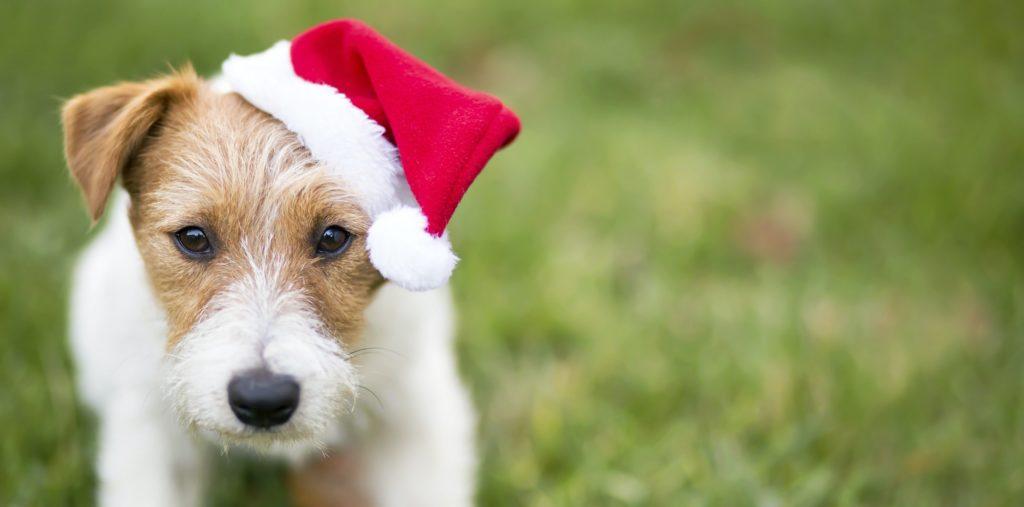 Santa dog banner
