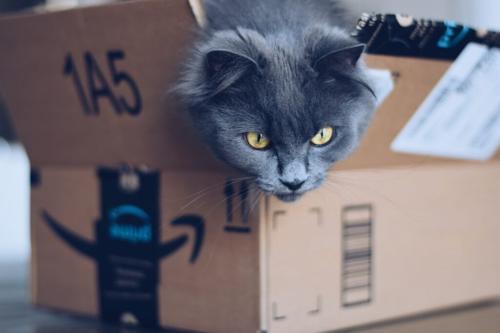 Gray cute fluffy kitty cat sitting in an Amazon Prime parcel delivery cardboard box